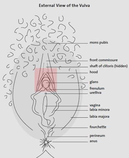 anatomy of female pussy eating